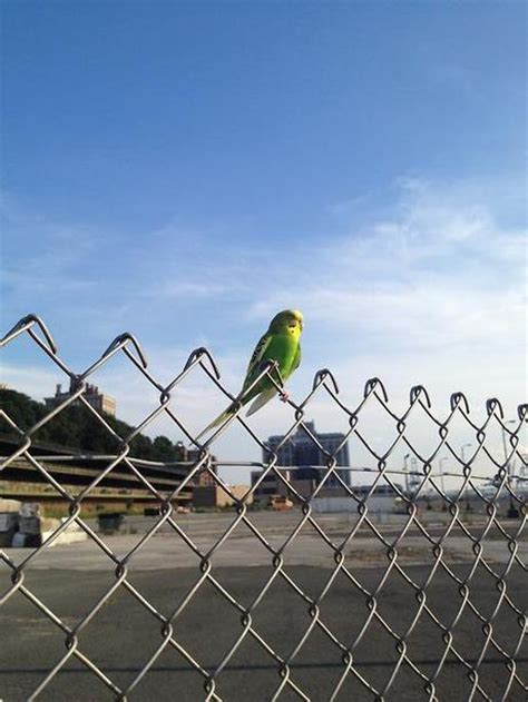 Yesterday, on My Bike, I Came Across a Neon Green Bird