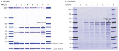Protein Analysis Using the Experion System | LSR | Bio-Rad