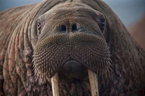 Top 10 animals found in Arctic region - The Mysterious World