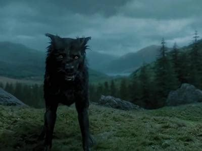 Best Dogs Of The Potter World -The Unabating Harry Potter